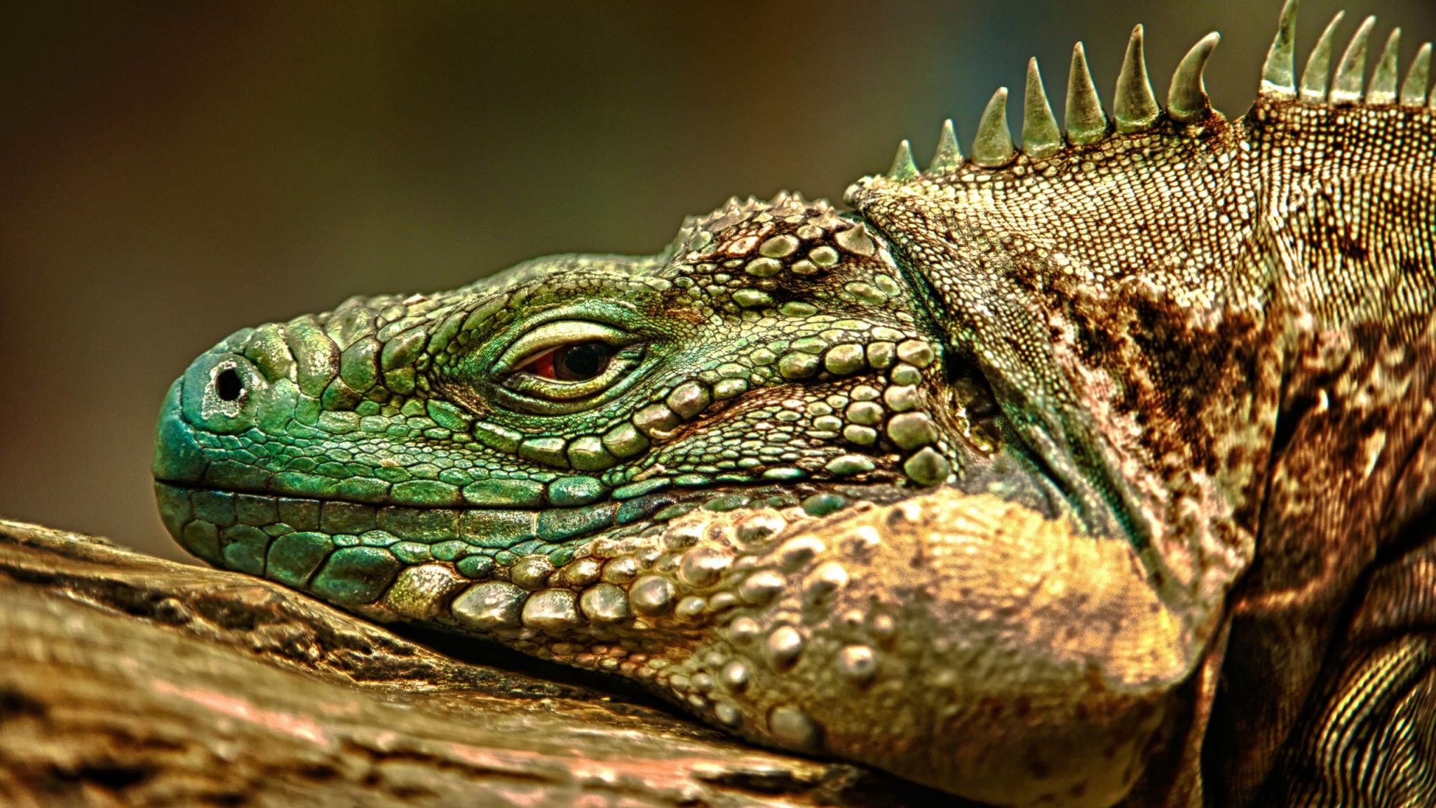 22 reptile hd wallpapers - photo #47