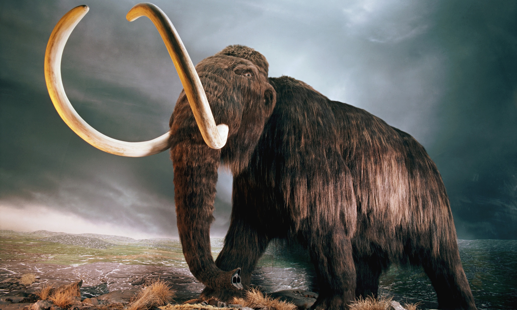 mammals that became extinct in ireland thousands of years ago