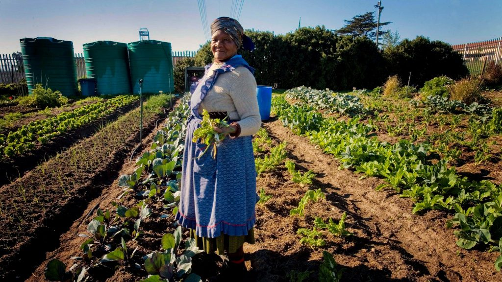 A woman holds up some of the vegetables she has grown in a garden in Cape Town, South Africa Photo: Kate Holt/Africa Practice