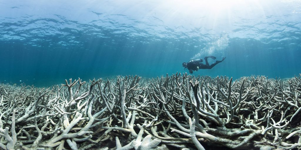 Coral bleaching at Heron Island Feb 2016 Photo: The Ocean Agency / XL Catlin Seaview Survey / Richard Vevers