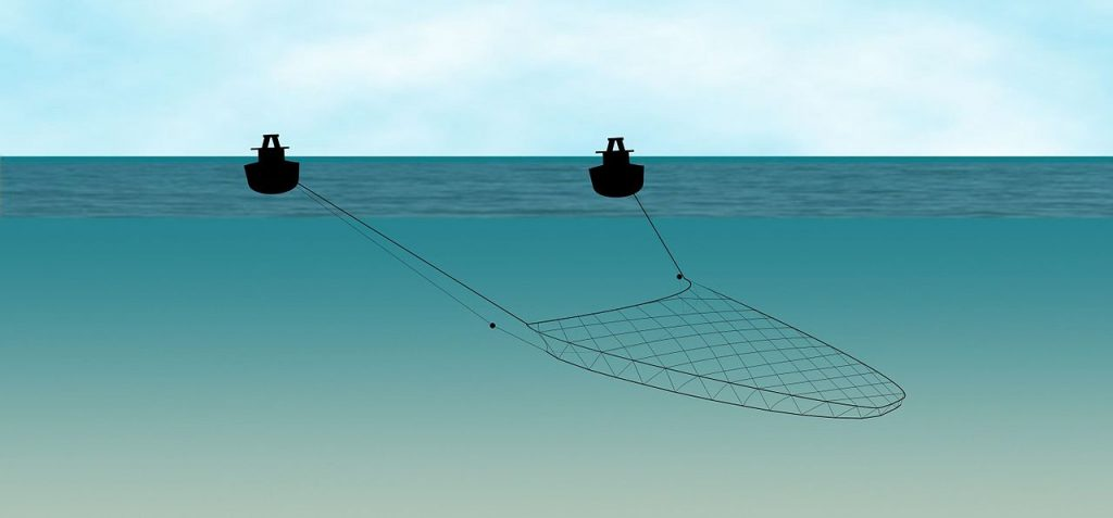 Pair Trawling Infographic: Ecomare/Oscar Bos