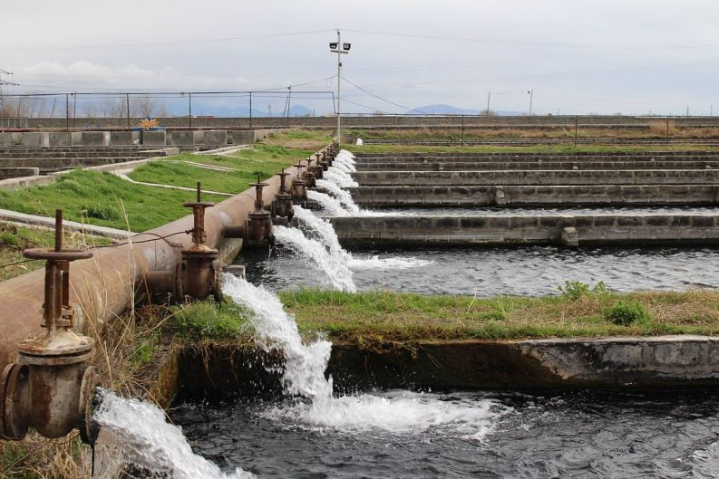 Masis Dzuk fish farm in Armenia Photo: Narek75
