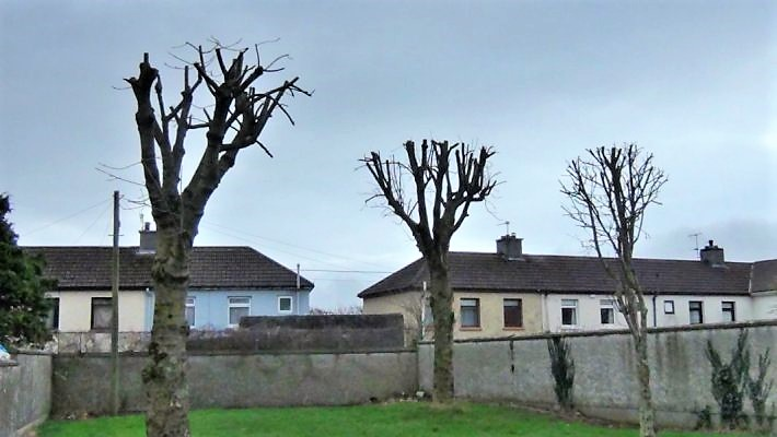 Trees in St. Joseph's Estate Tralee following tree works in 2017 Photo: Maureen O'Sullivan