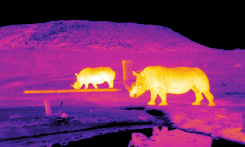 Infrared image of rhinos in South Africa. Photo: Endangered Wildlife Trust/LJMU
