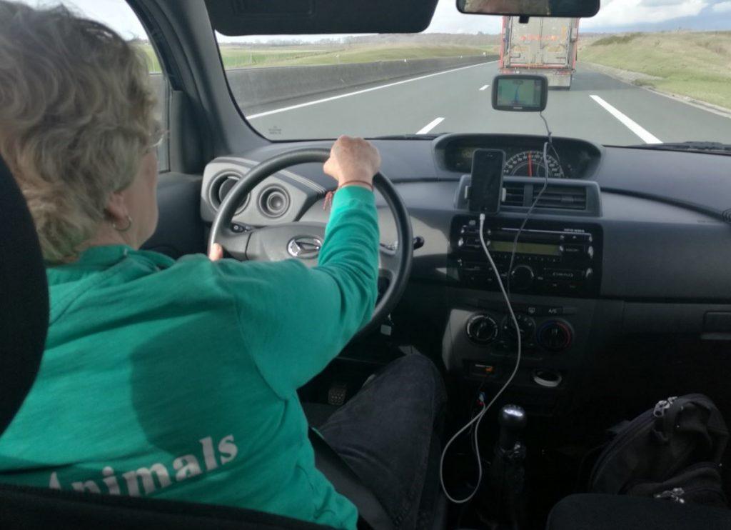 Eyes on Aminals team following one of the trucks transporting Irish calves Photo: Eyes on Animals