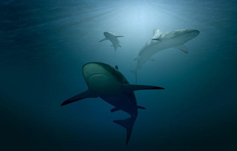 Sharks in Ocean Photo: PIRO4D / Pixabay