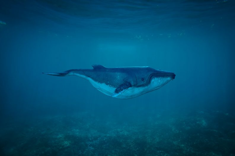 Whale in the sea Photo: TheDigitalArtist/ Creative Commons