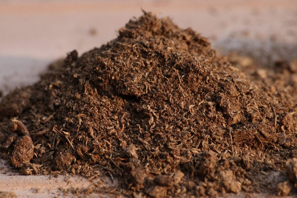 Canadian Sphagnum peat moss Photo: Ragesoss