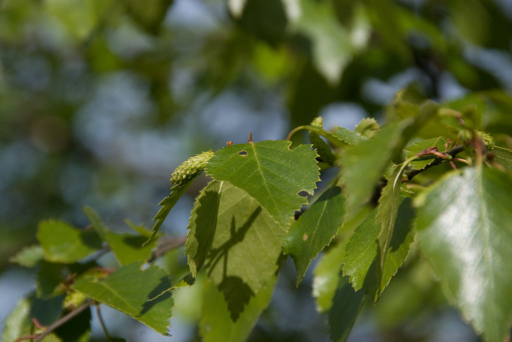 A Gallery Focusing On The Leaves From Different Native