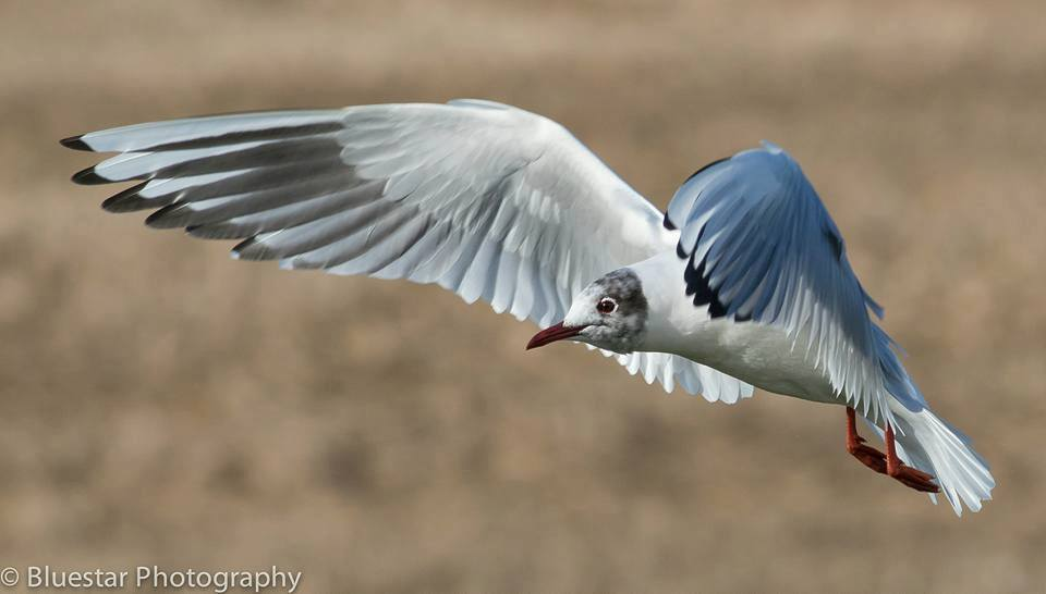 Gull by Michael Norton
