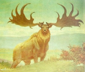 Irish_Elk 2