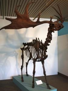 great elk 1