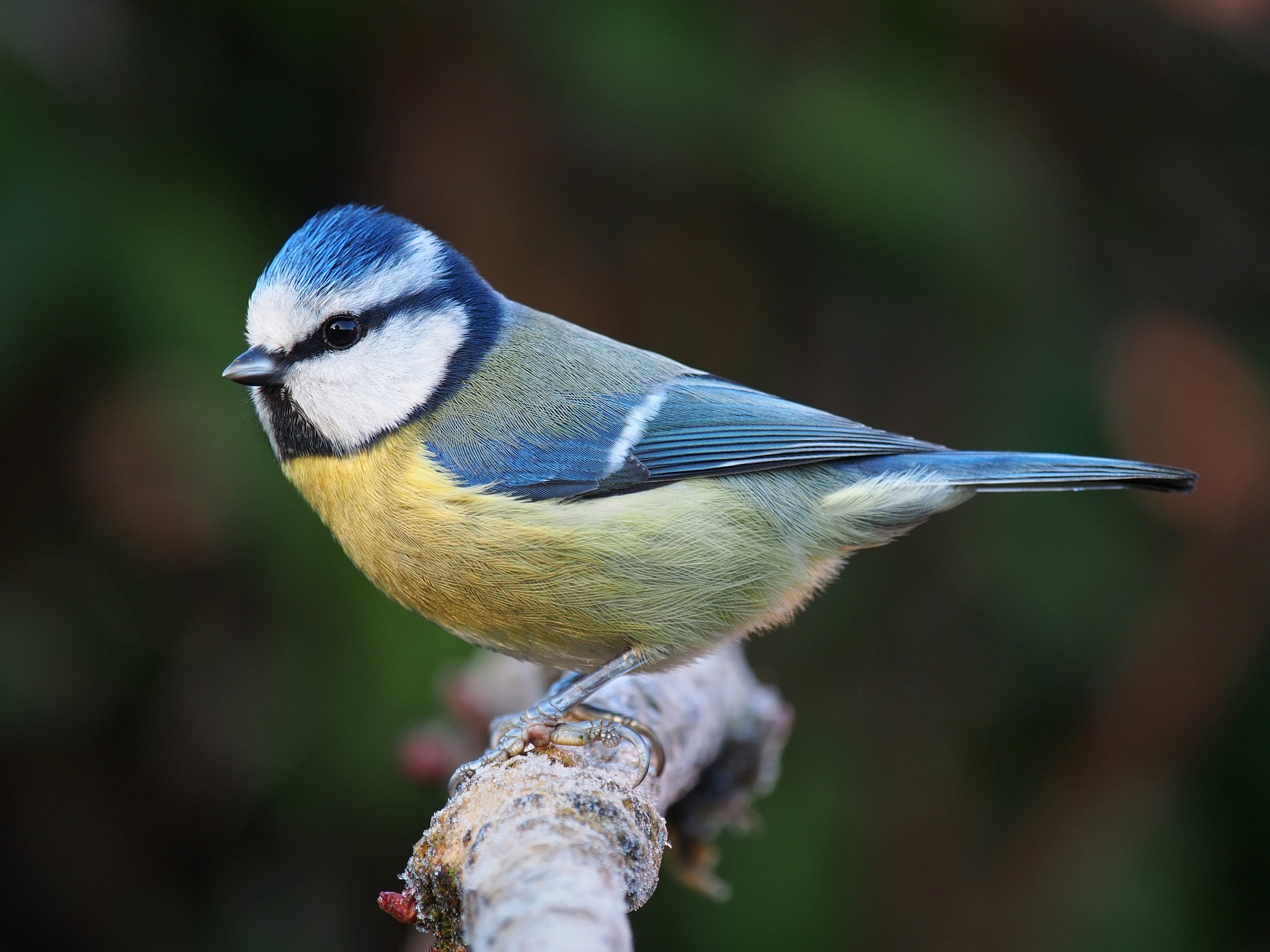 Know your birdsong! Click through our quick guide to the calls of