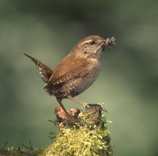 Know your birdsong! Click through our quick guide to the