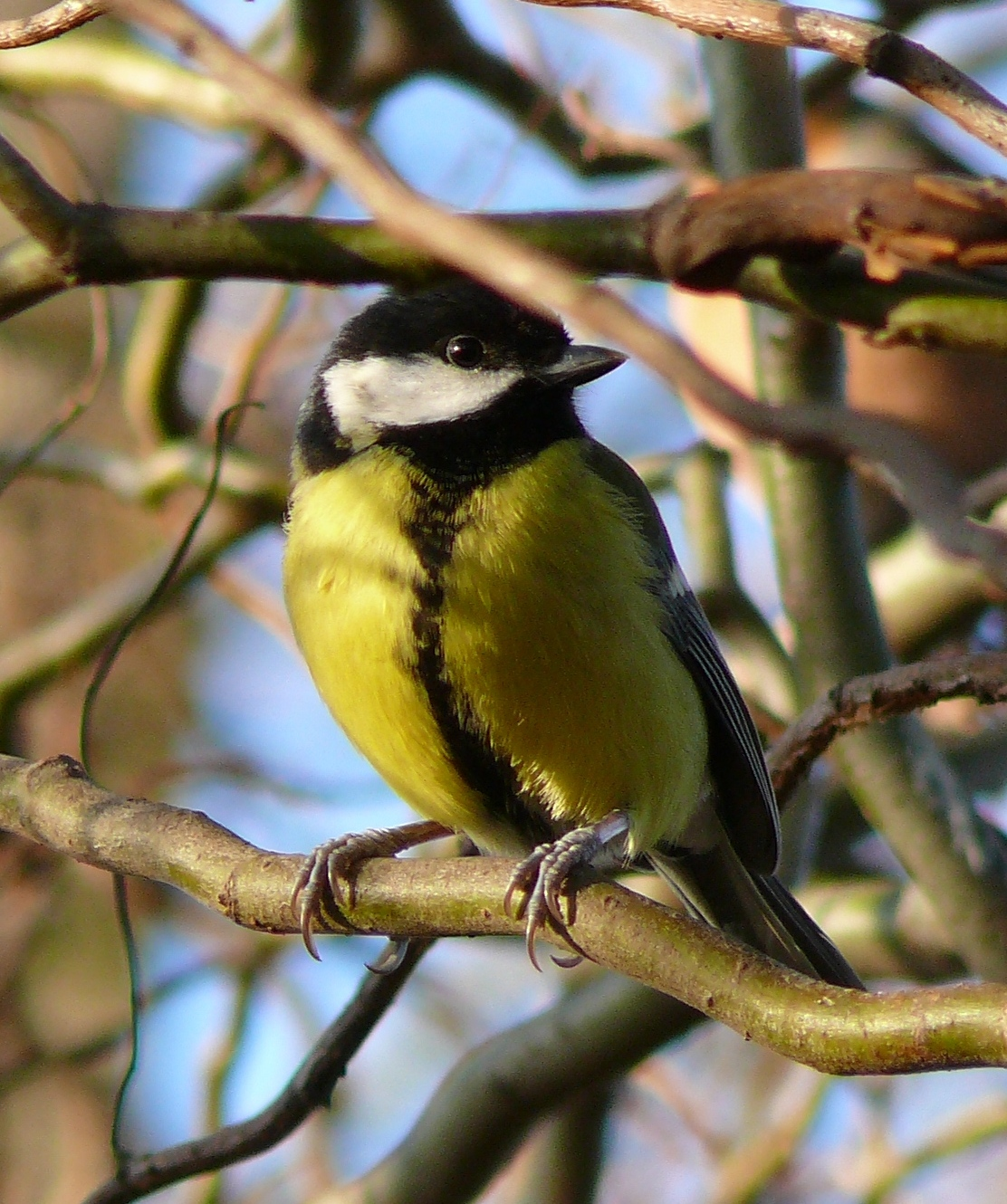 Know Your Birdsong Click Through Our Quick Guide To The