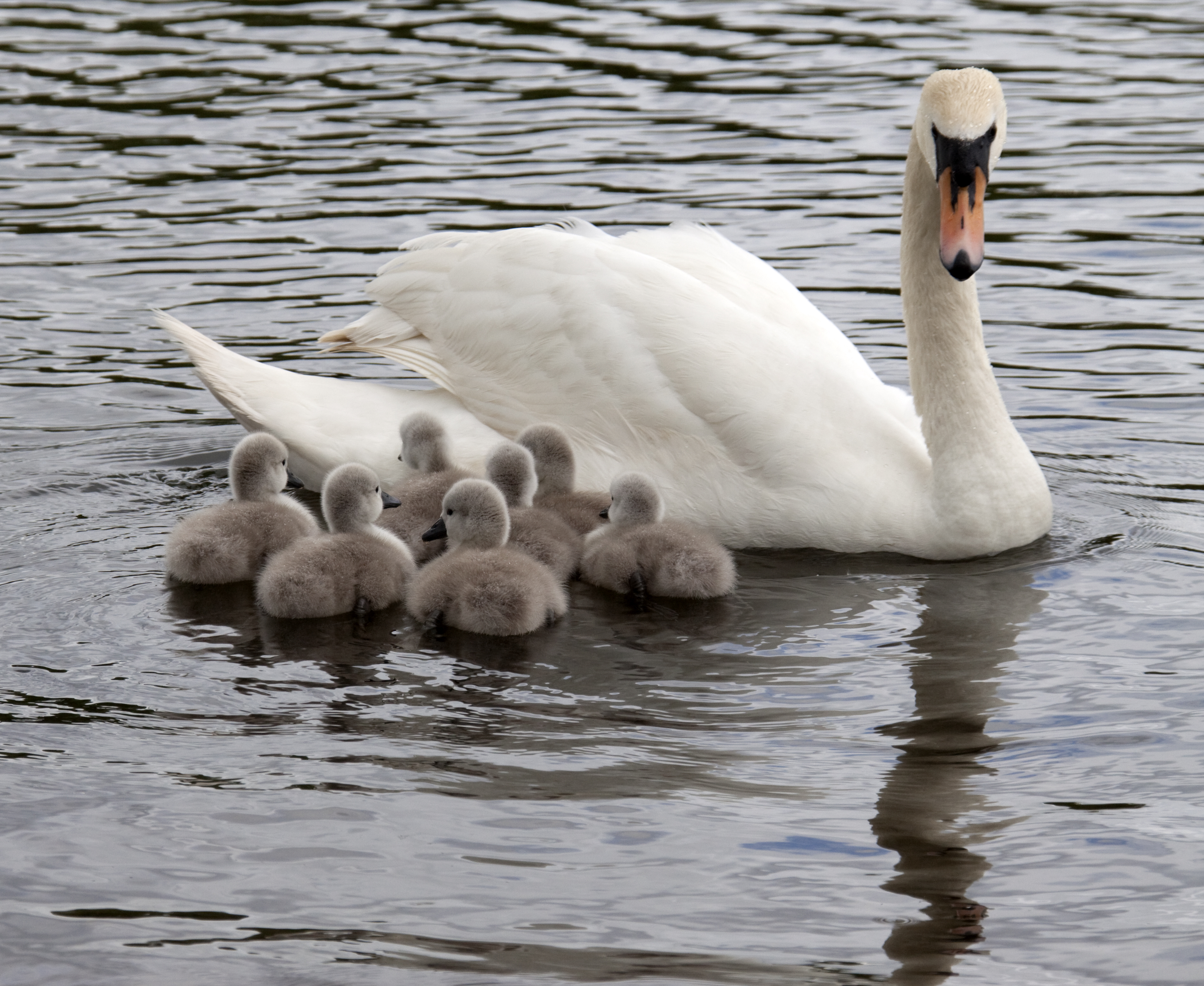 For The Morning Thats In It 5 Irish Baby Animals To
