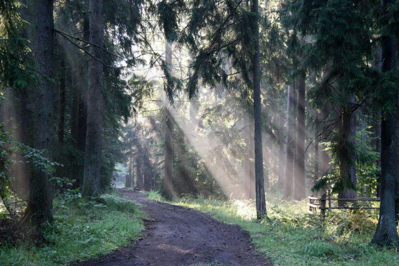 Bialowieza Forst Poland