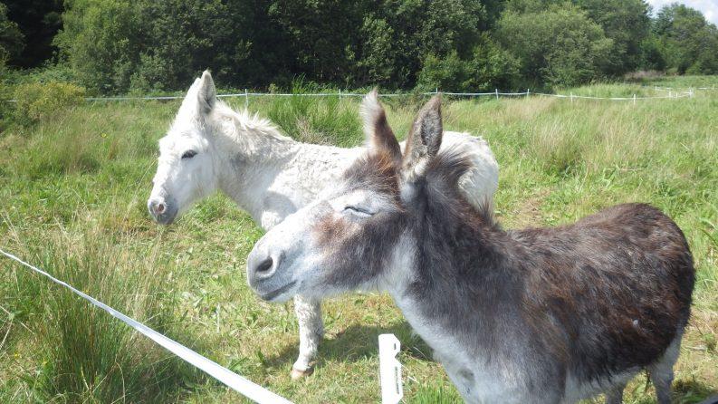 Donkey Lullymore Bog