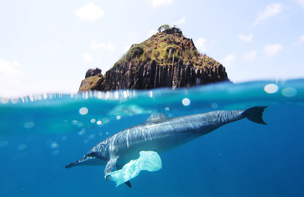 dolphin plastic bag at fernando de noronha Photo: Jedimentat44