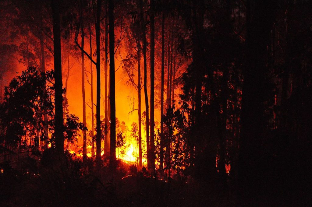 Eucalyptus forest fire, in Madeira, Portugal, 3 July 2011 Photo: anagh