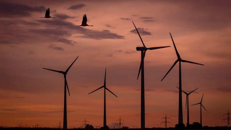 wind turbines birds bats