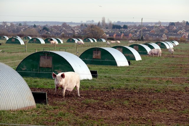 Pig farm near Ollerton Photo: Graham Hogg