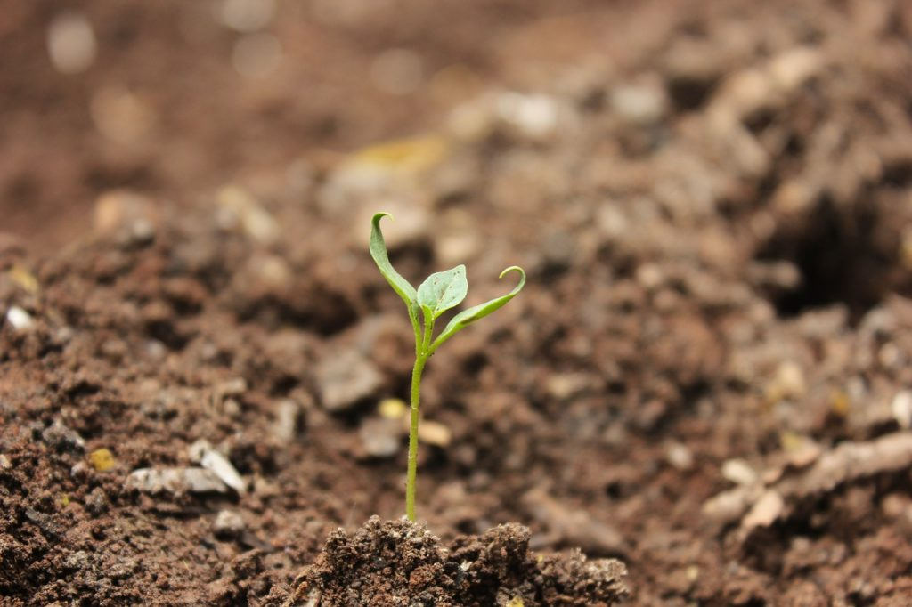 Seedling growing in soil Photo: Mayur Ankushe / Pixabay