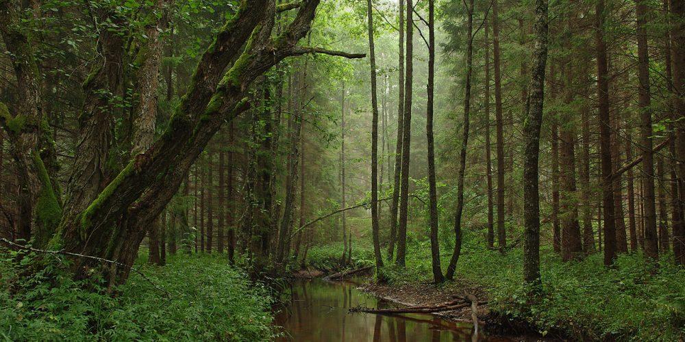 Tarvasjõgi at Kõrvemaa Nature Park in Estonia Photo: Ireen Trummer